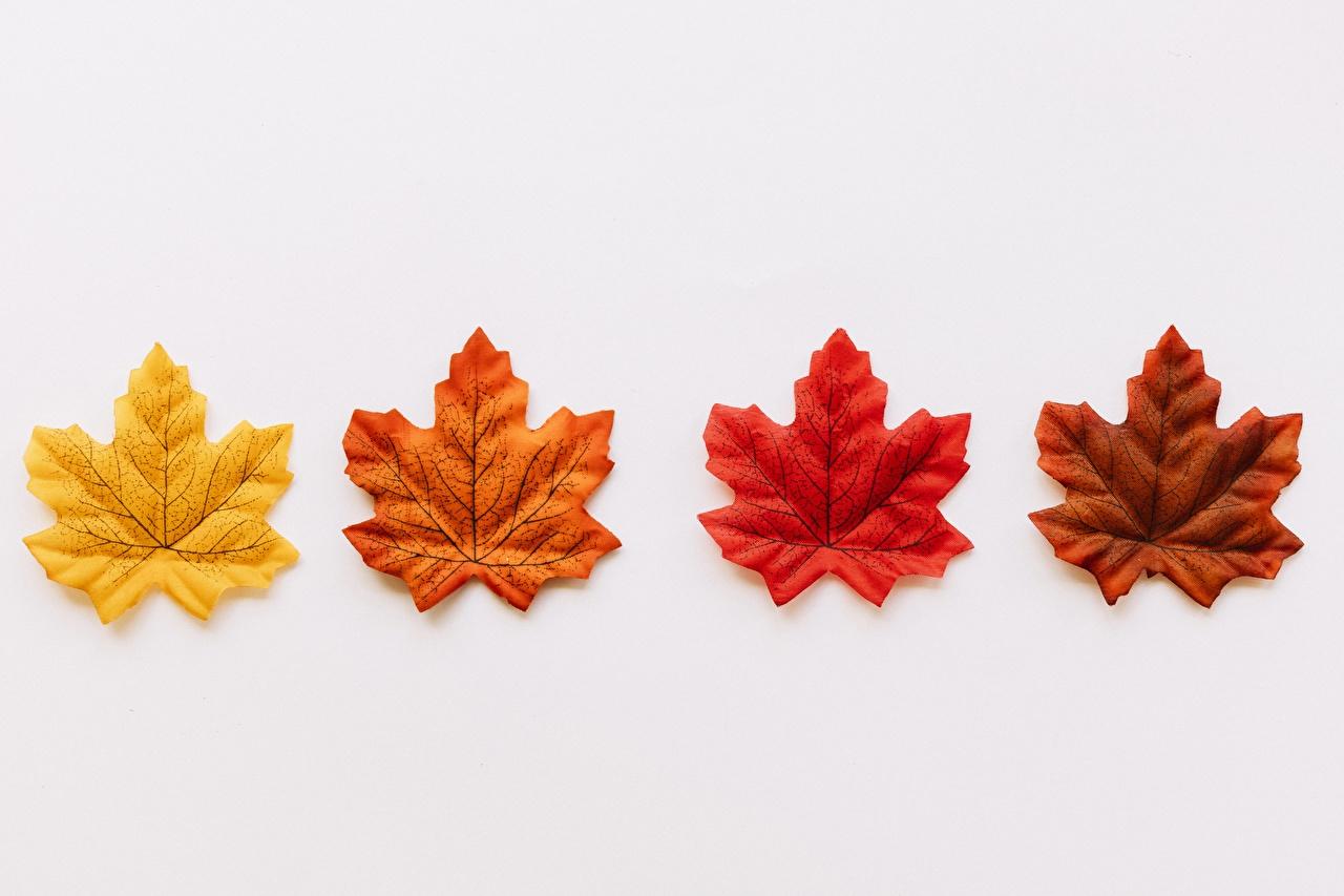 Фото Листья Клён желтая Красный Оранжевый коричневые Серый фон лист Листва клёна клёновый Желтый желтых желтые красные красных красная оранжевых оранжевые оранжевая коричневая Коричневый сером фоне