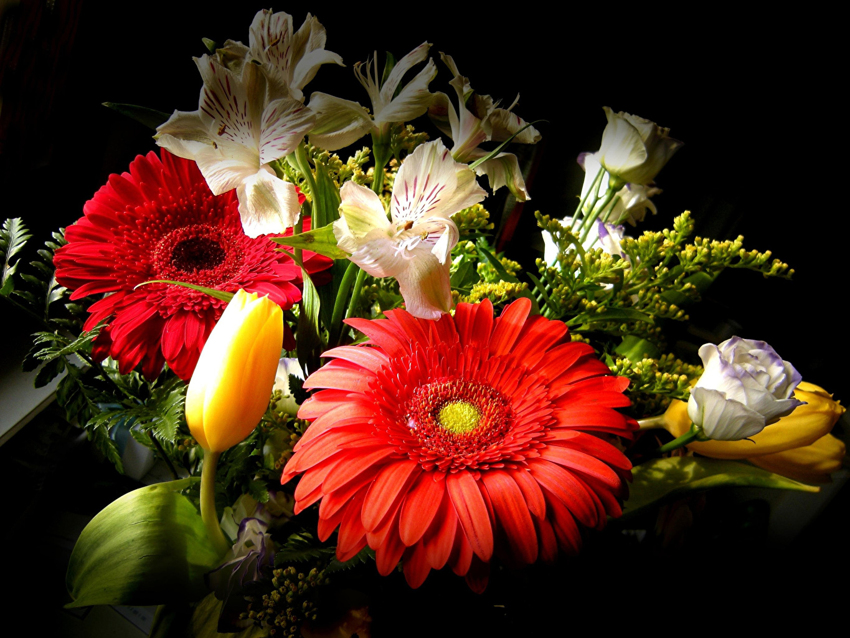 Фотографии букет Герберы Тюльпаны цветок Эустома Альстрёмерия на черном фоне Букеты гербера тюльпан Цветы Лизантус Черный фон
