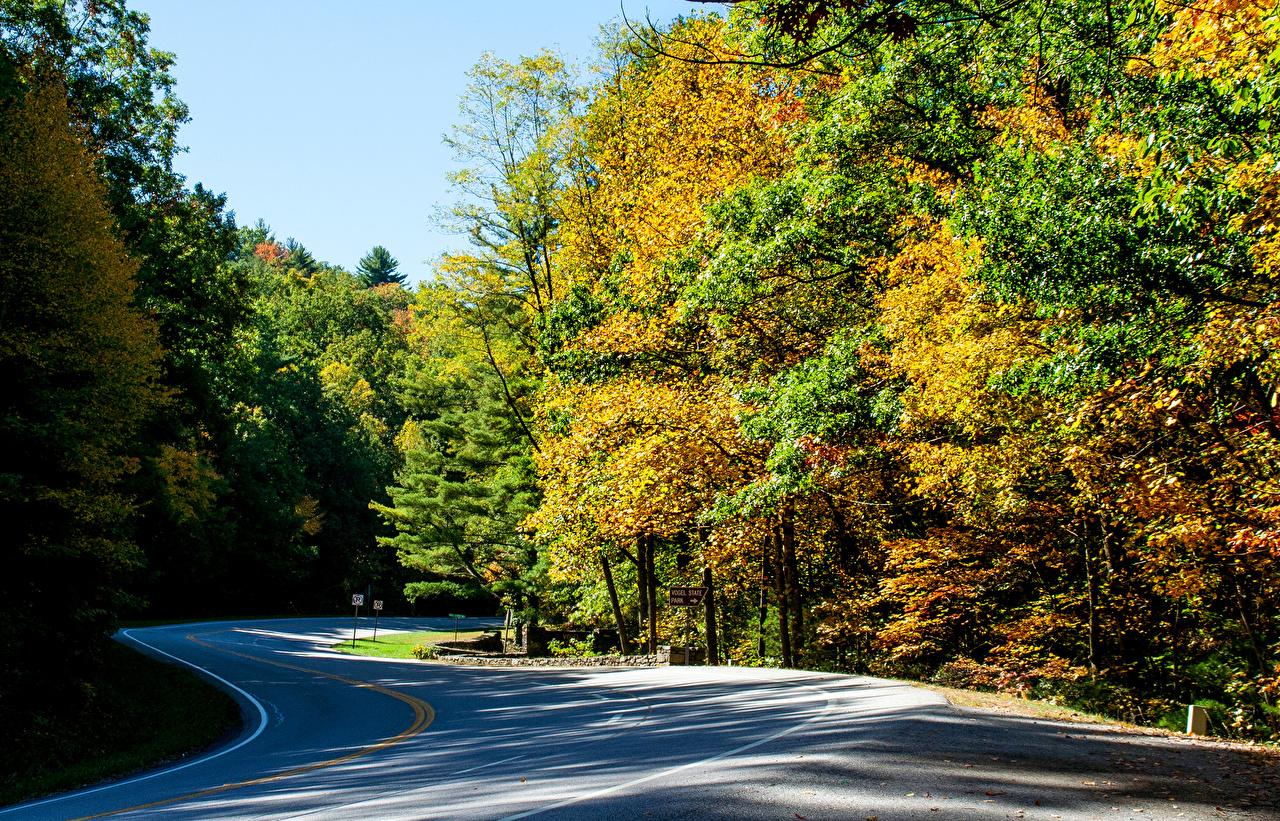 Картинка америка Vogel State Park Осень Природа лес парк Дороги США штаты осенние Леса Парки