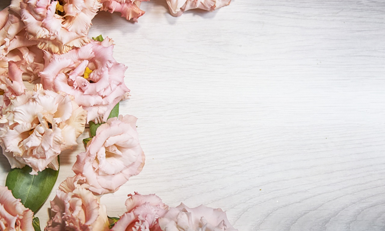 Фотография цветок Эустома Шаблон поздравительной открытки Доски Цветы Лизантус