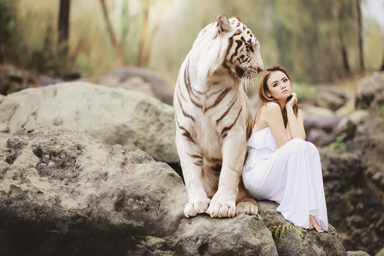 Картинки тигр шатенки Bengal tiger 2 Азиаты Камни сидящие животное Тигры Шатенка две два Двое вдвоем сидя Сидит Камень Животные