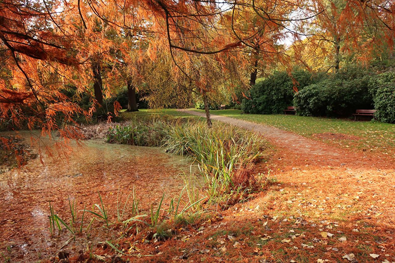 Фотография Лондон Листва Англия Bushy Park Осень Природа Пруд Парки Листья осенние