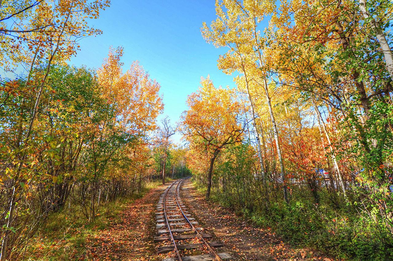 Фото Осень Природа Леса Железные дороги Деревья осенние лес дерево дерева деревьев