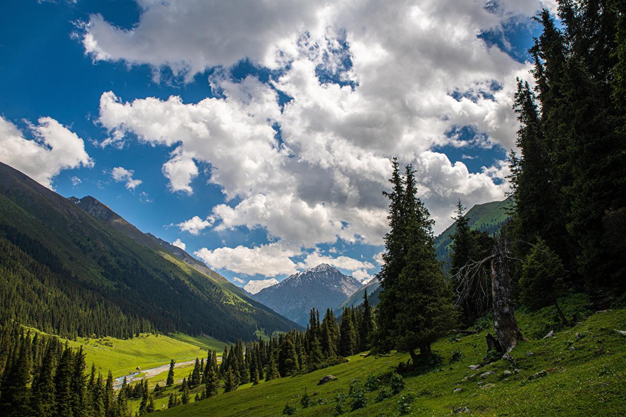 Фотографии Altyn Arashan, Kyrgyzstan гора Природа дерево облачно Горы Облака облако дерева Деревья деревьев