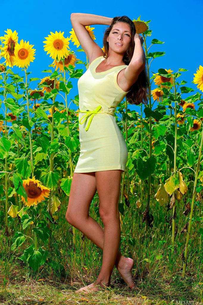 Фотографии Rosella RU 98 Поза молодая женщина ног Подсолнухи смотрит платья  для мобильного телефона позирует девушка Девушки молодые женщины Ноги Подсолнечник Взгляд смотрят Платье