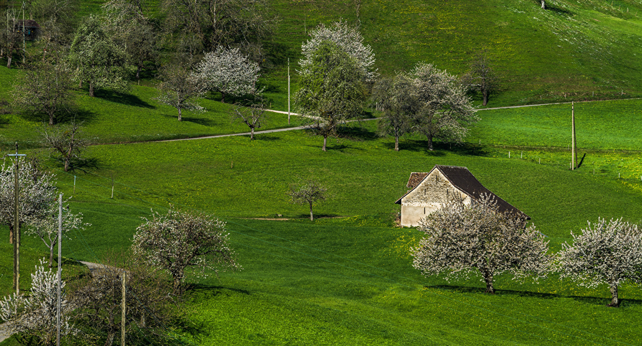 Фото Швейцария Baselland Природа Здания Цветущие деревья Дома