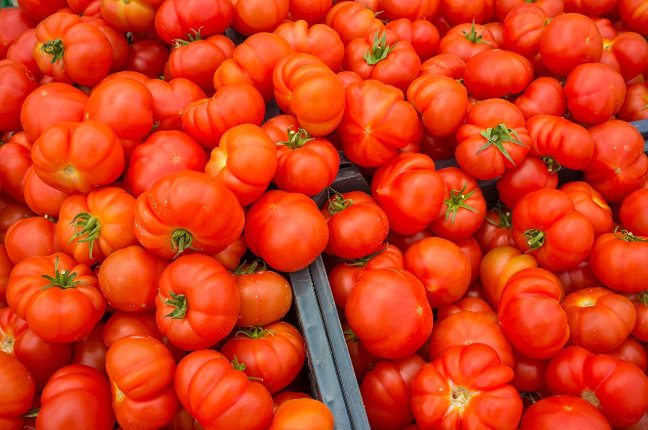 Картинка Томаты красные Пища Много красных Красный красная Помидоры Еда Продукты питания