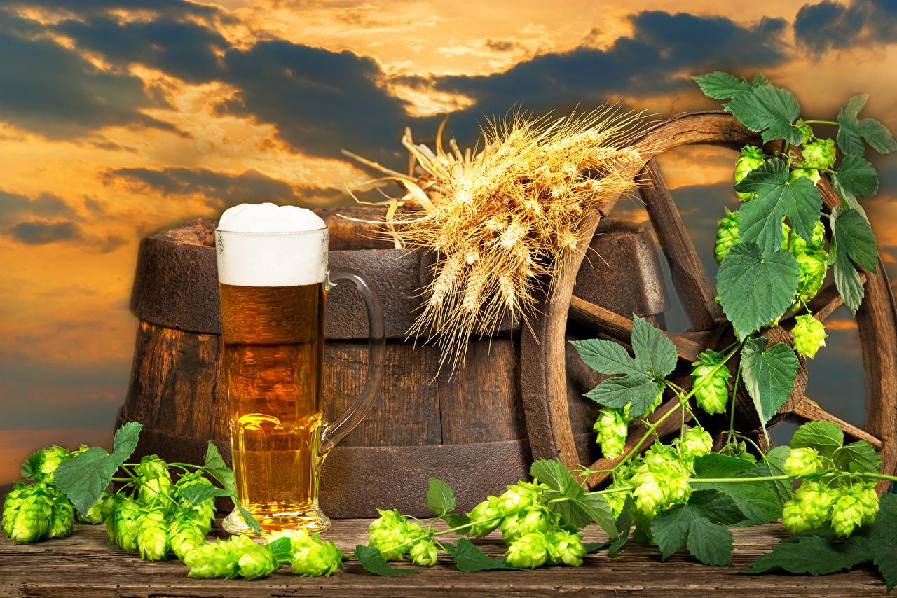 Картинки Пиво Хмель Колос Бочка Пища Пена Кружка Еда Продукты питания