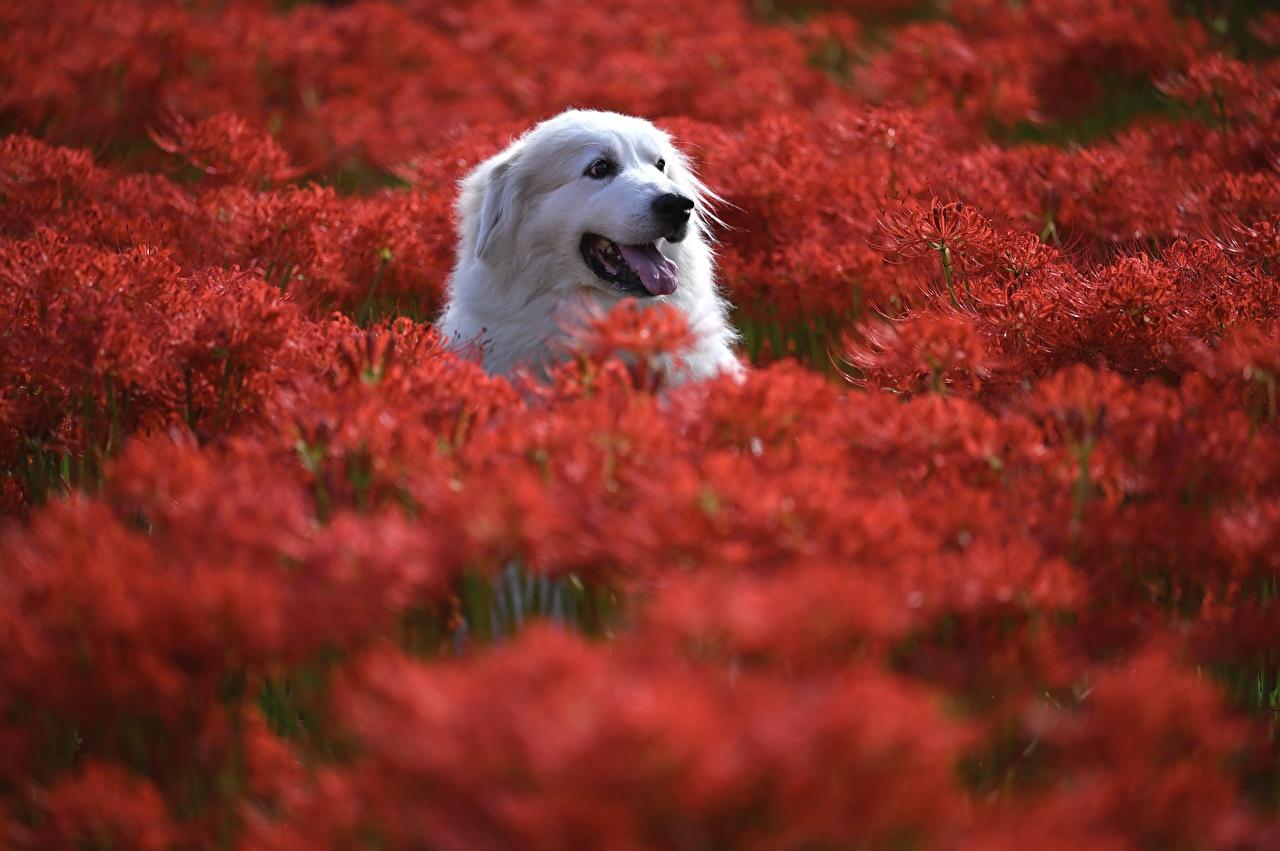 Картинка Собаки Размытый фон Голова Животные собака боке головы животное