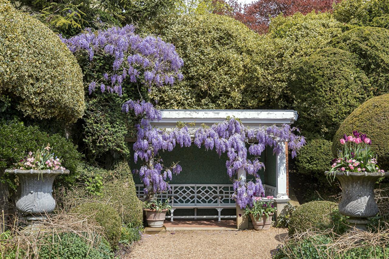 Фотографии Англия Ascott House gardens Природа тюльпан Парки Глициния Скамья Кусты дизайна Тюльпаны парк Вистерия Скамейка кустов Дизайн