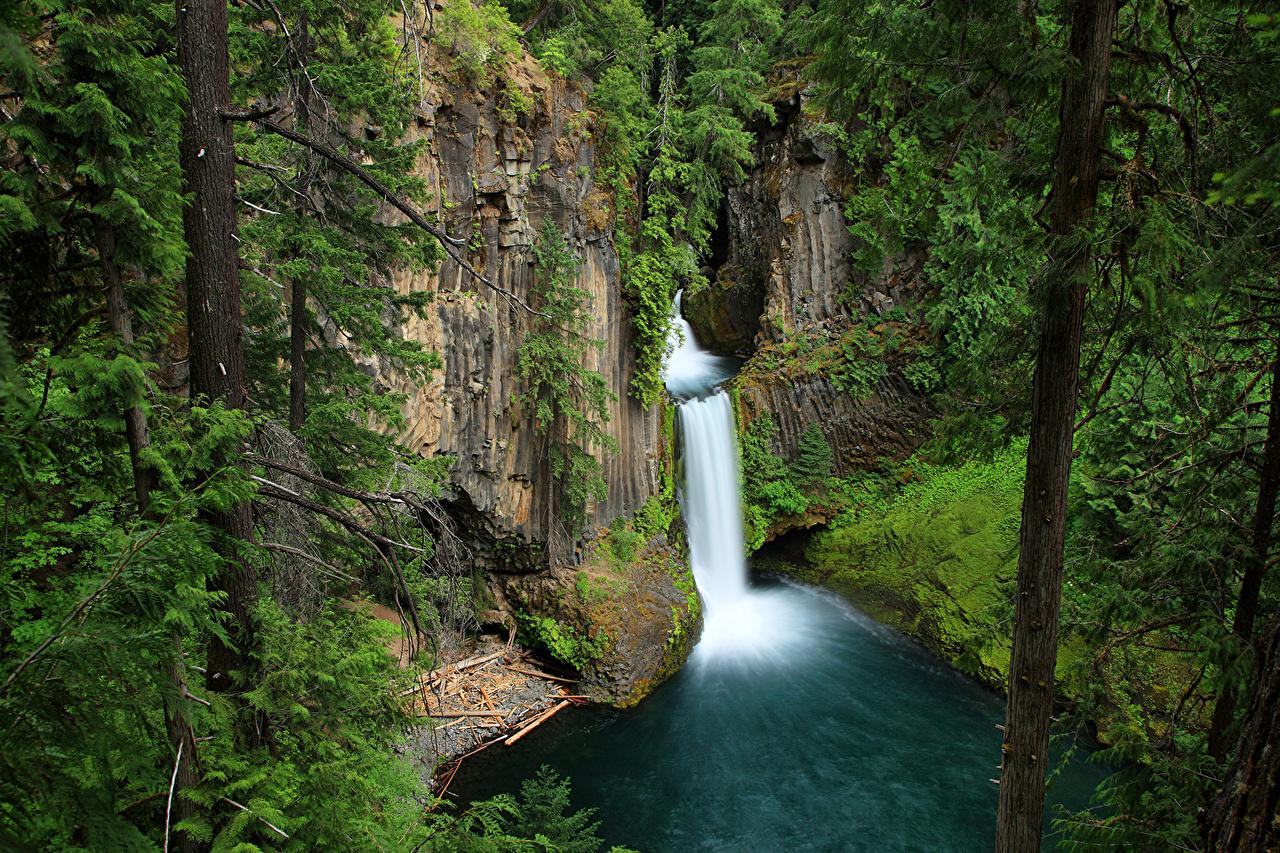 Картинка штаты Toketee Falls Oregon Скала Природа Водопады Ствол дерева США Утес