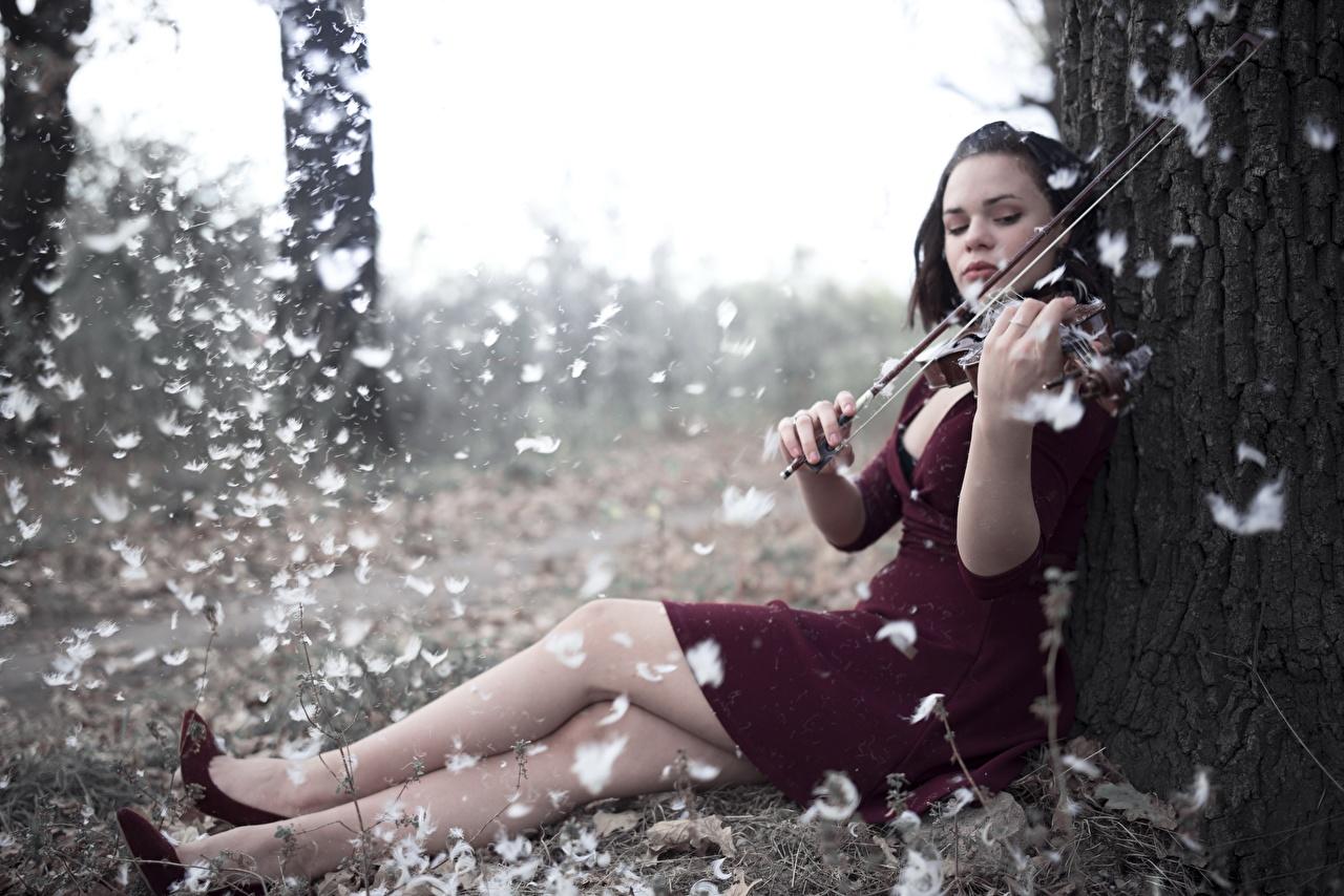 Картинка Скрипки Девушки Ноги Перья сидящие Платье Сидит