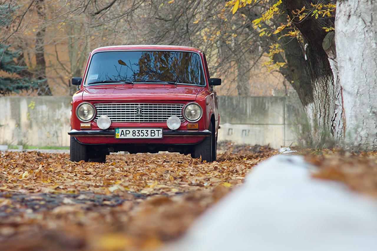 Фотография Российские авто Листья VAZ-2101 осенние Красный фар машины Спереди лист Листва Осень красная красные красных Фары авто машина Автомобили автомобиль