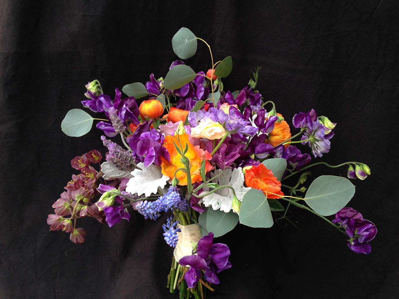 Фотографии букет цветок Душистый горошек Черный фон Букеты Цветы на черном фоне