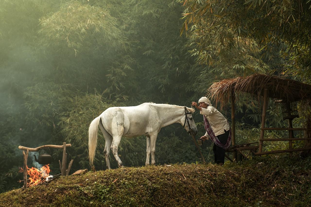 Фотография Лошади Старуха Костер Белый пламя Азиаты Животные лошадь старая женщина пожилая женщина костры костёр костром белых белые белая Огонь азиатка азиатки животное