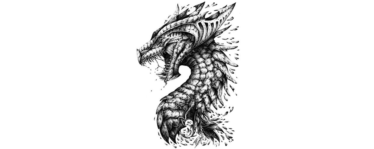 Картинка дракон Фэнтези Черно белое головы Белый фон Драконы Фантастика черно белые Голова белом фоне белым фоном