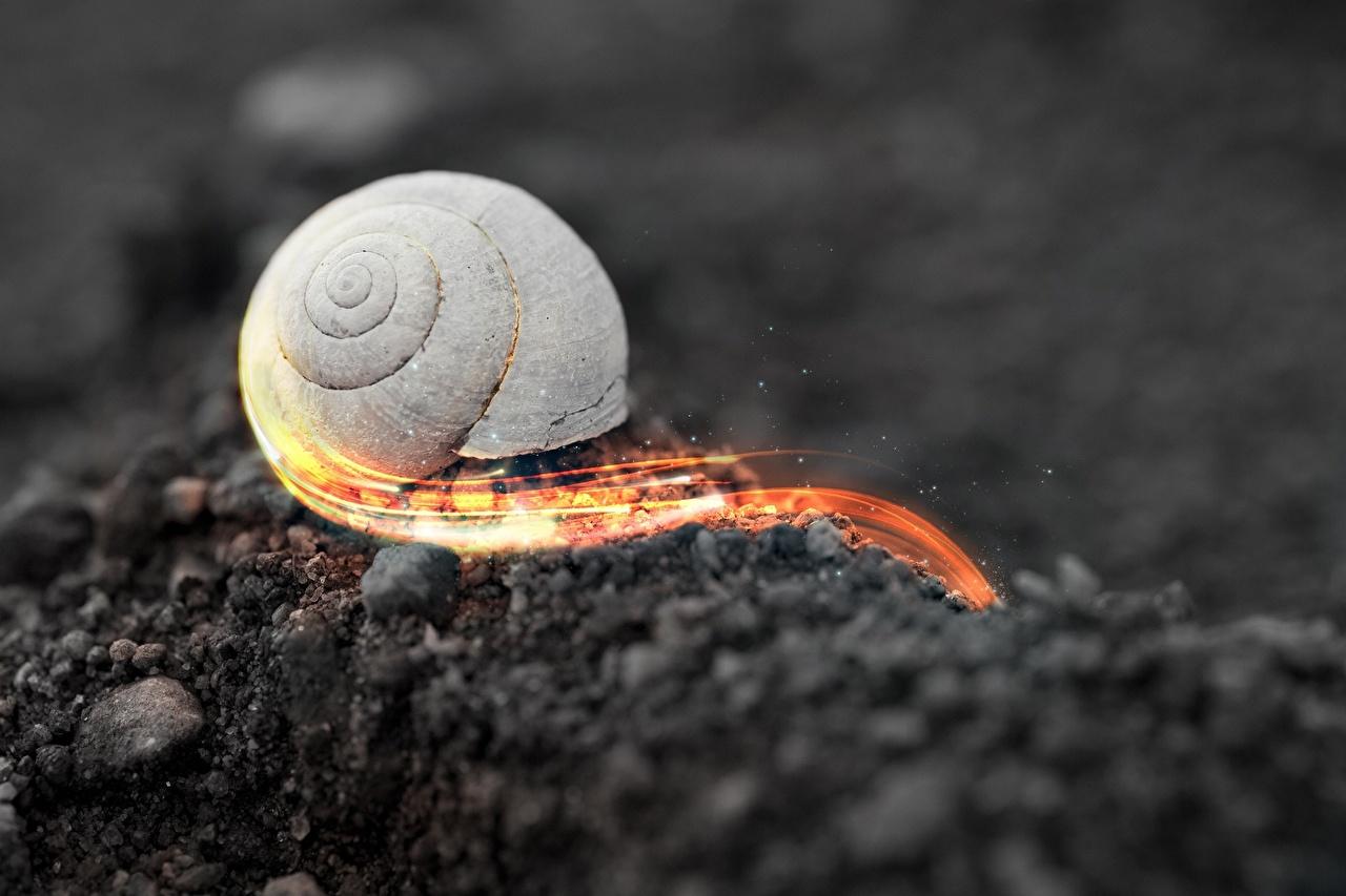 Картинка Улитки Почва by Robin de Blanche едет Макросъёмка вблизи животное земля Макро едущий едущая скорость Движение Животные Крупным планом