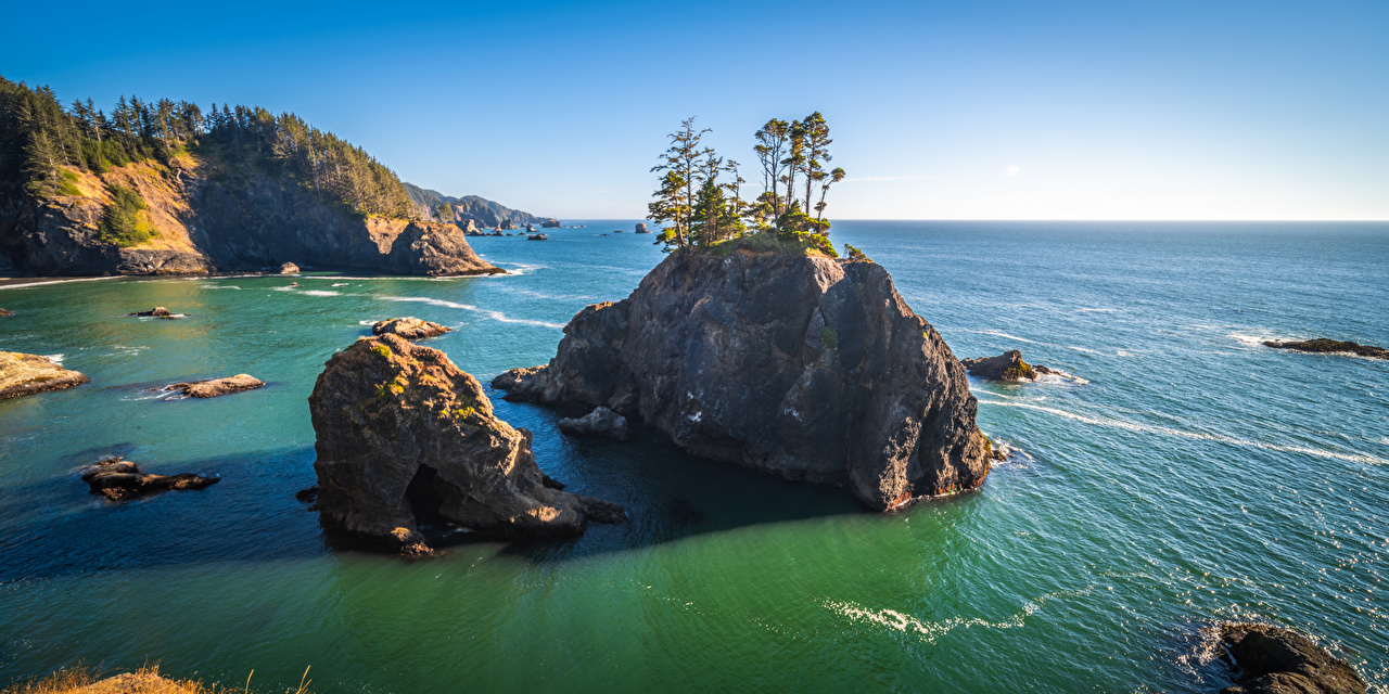 Картинка США Oregon Скала Природа берег дерева штаты америка Утес скале скалы Побережье дерево Деревья деревьев