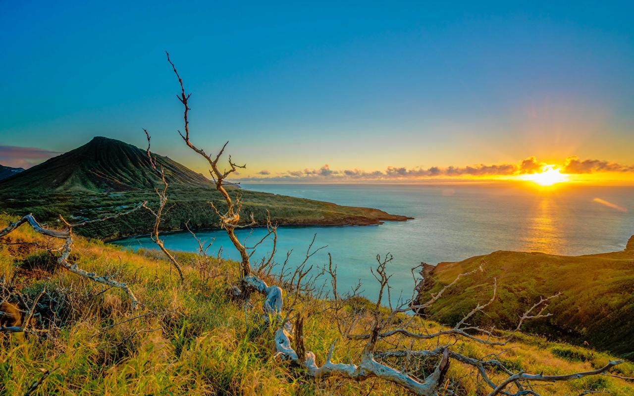 Обои Природа США Ветки Океан Рассветы и закаты берег Трава Гавайи штаты ветвь Побережье
