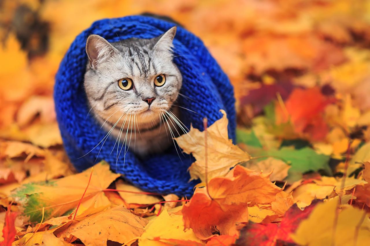 «Уж небо осенью дышало». Психологи рассказали, каким людям нравится осеннее время года