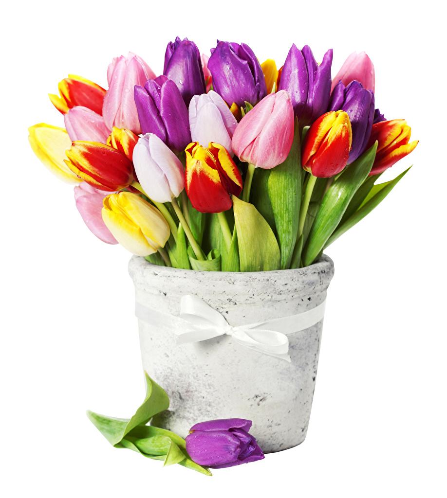 Фотографии Разноцветные Тюльпаны Цветы вазы белым фоном цветок Ваза вазе Белый фон белом фоне