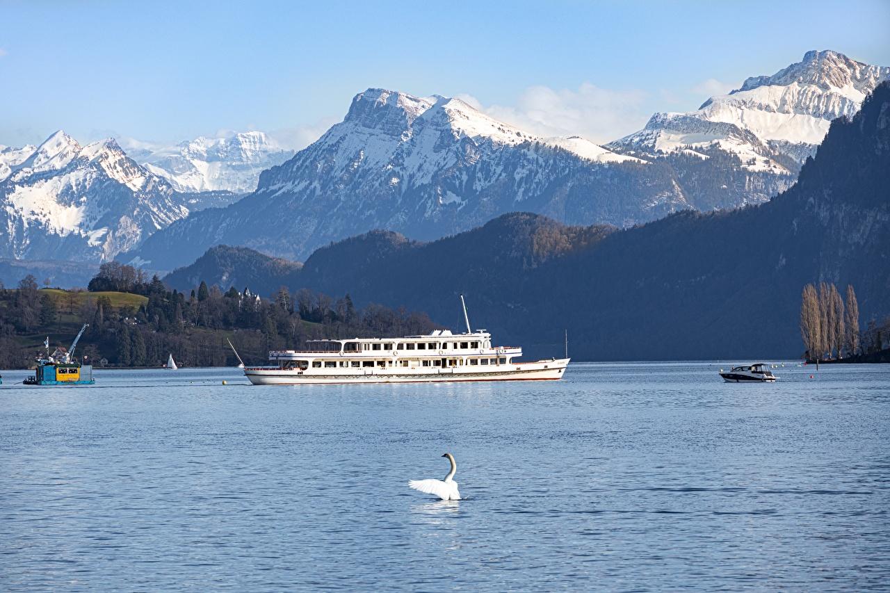 Фотографии Птицы лебедь Альпы Швейцария lake Lucerne гора Природа Озеро Речные суда птица Лебеди альп Горы