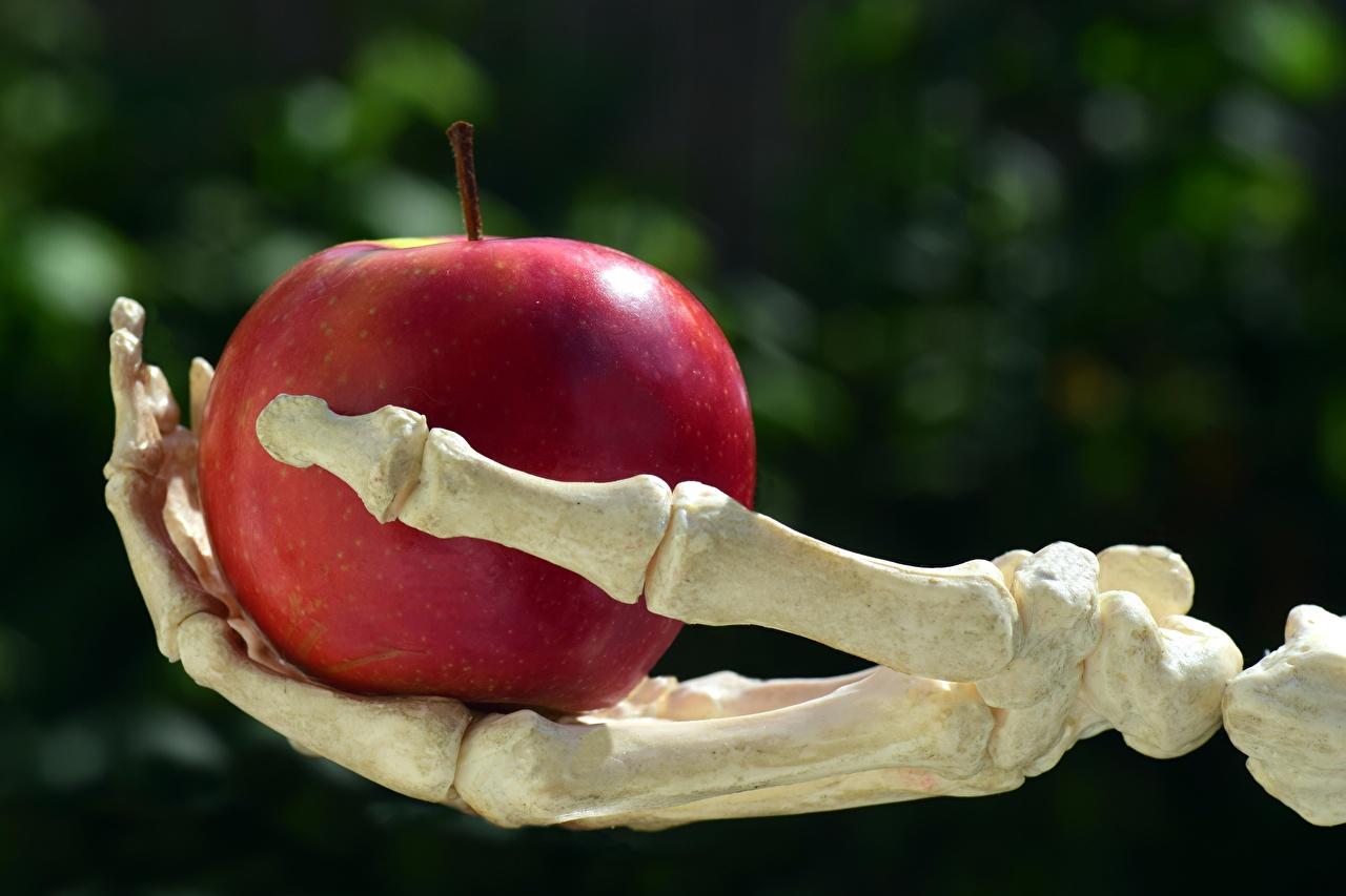 Фотография Кости Размытый фон скелеты Красный Яблоки Руки кость боке Скелет скелета красная красные красных скелетов рука