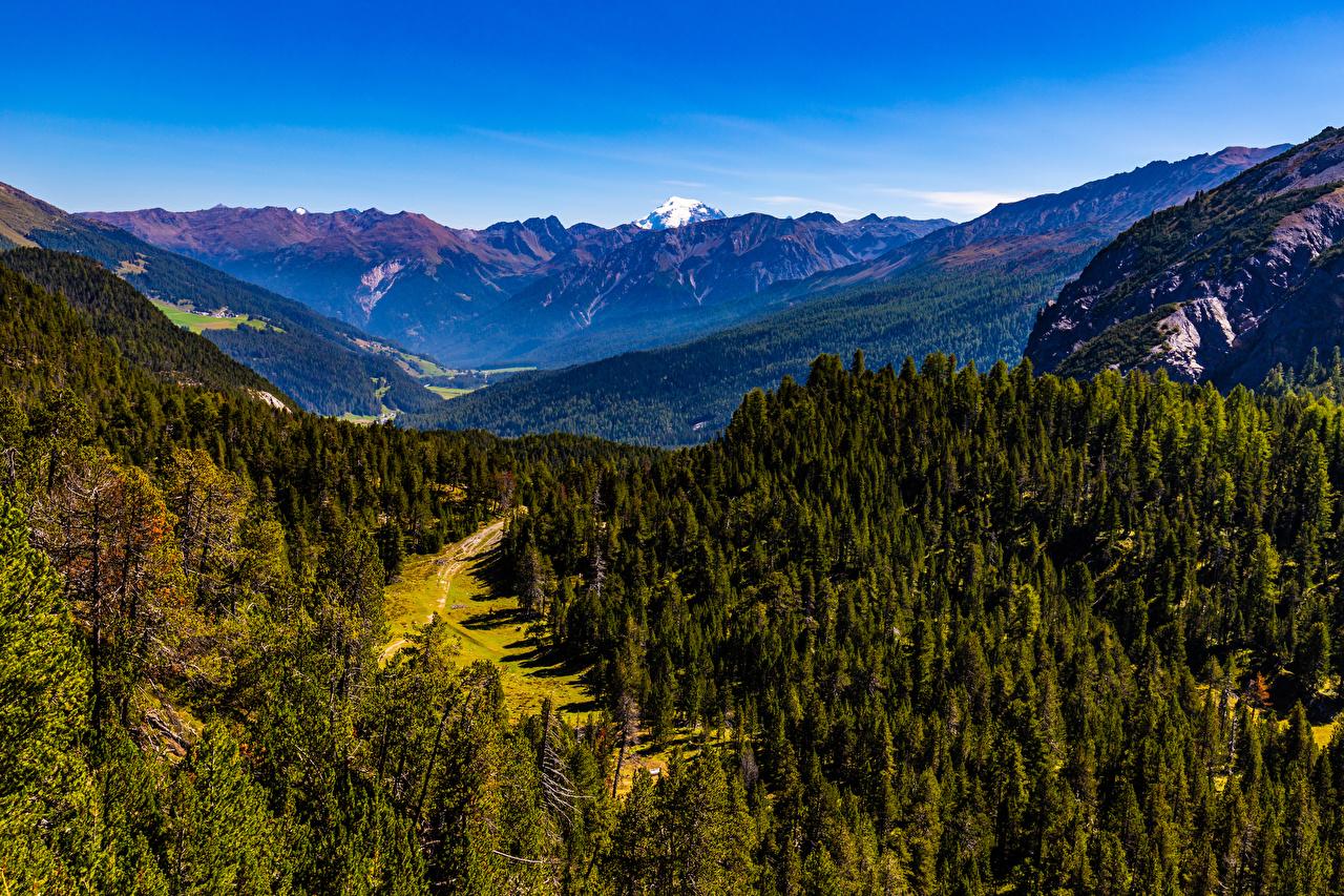 Фотография альп Швейцария Graubünden гора Природа лес Альпы Горы Леса