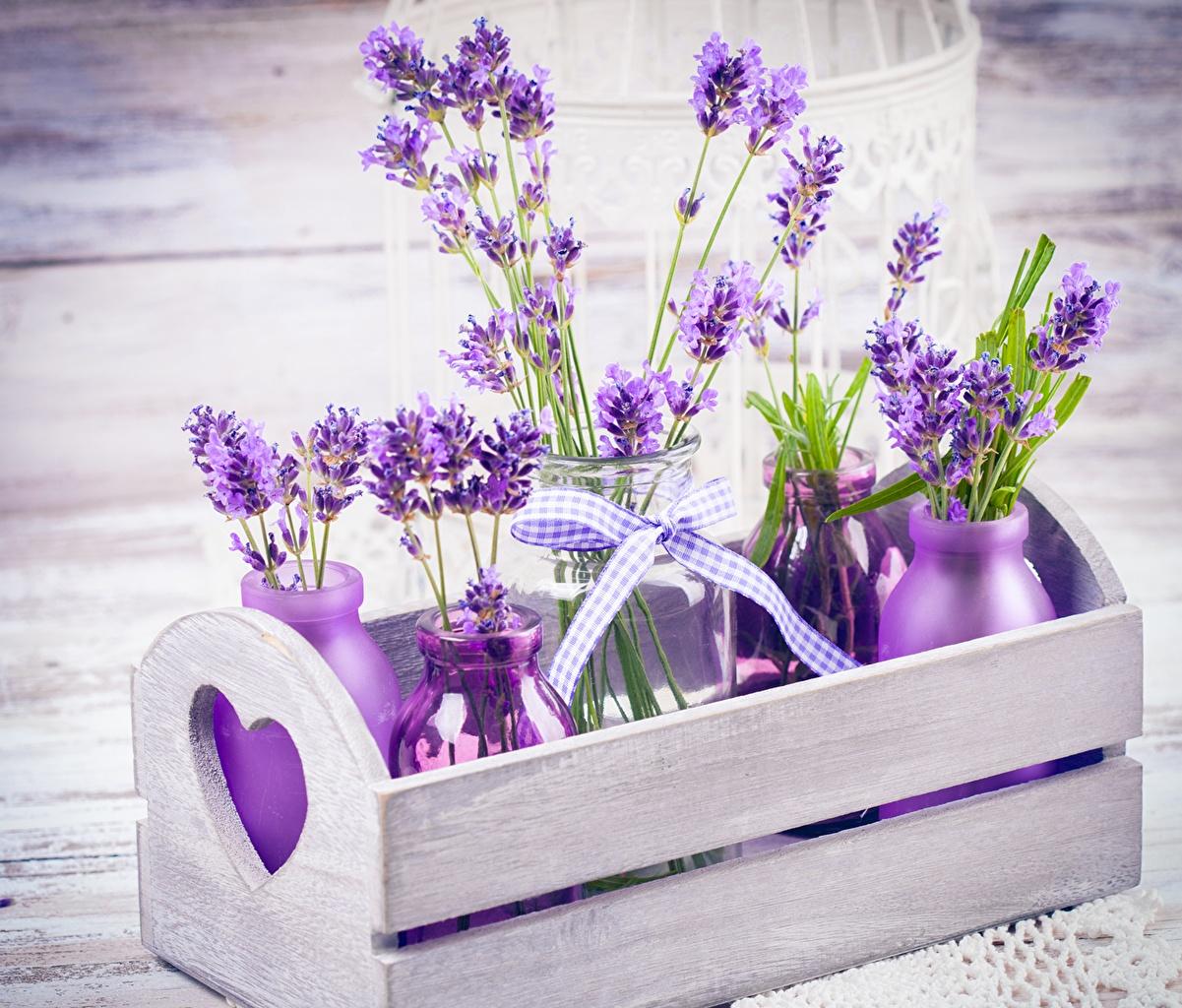 Обои для рабочего стола фиолетовых Цветы банки Лаванда Крупным планом Фиолетовый фиолетовые фиолетовая банке Банка цветок вблизи