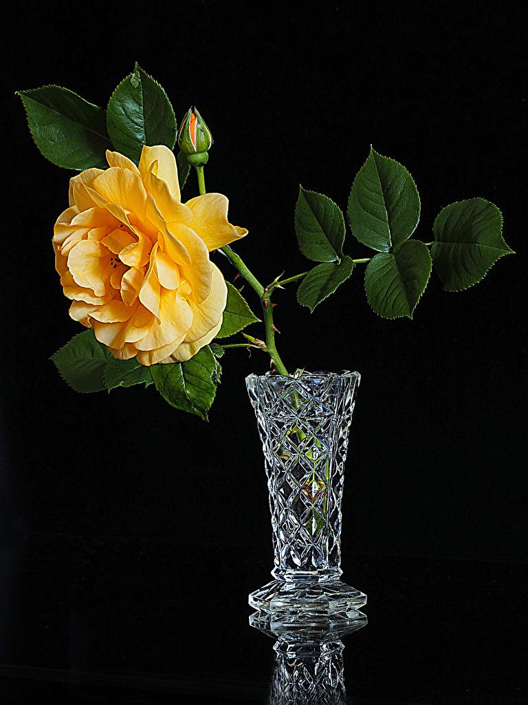 Фотография Розы желтая цветок Ваза Бутон Черный фон  для мобильного телефона роза Желтый желтые желтых Цветы вазе вазы на черном фоне