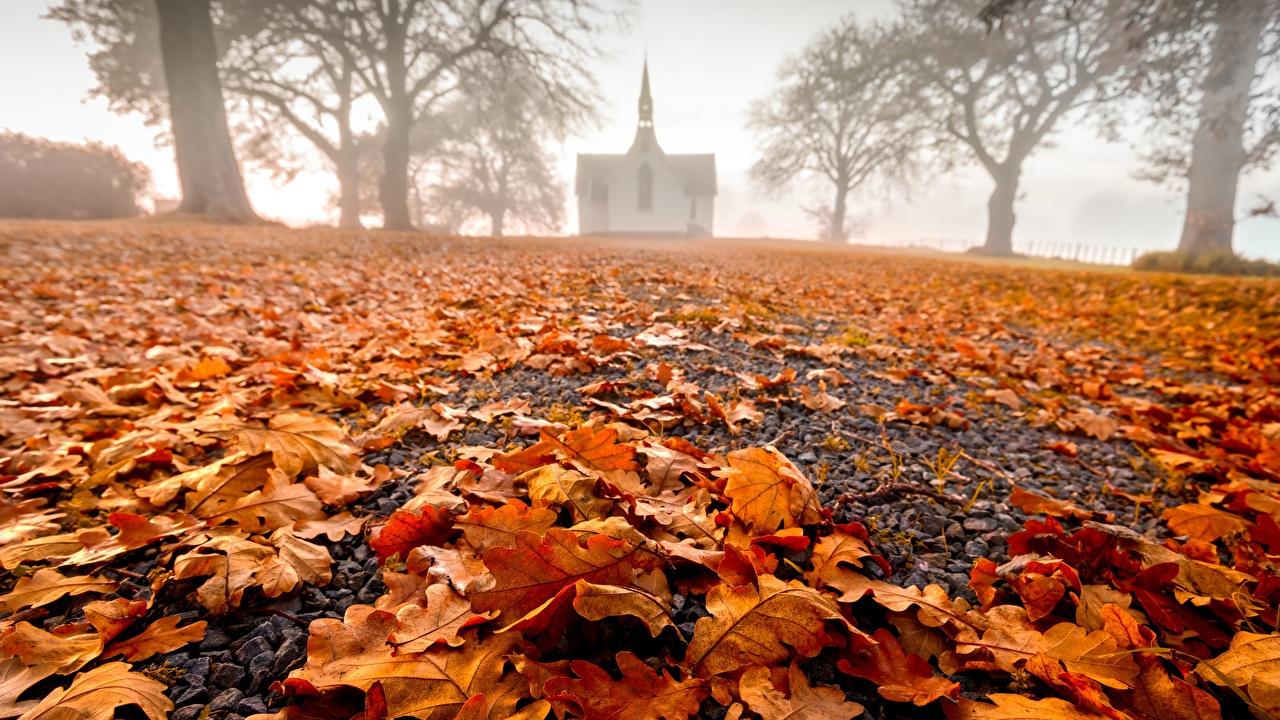 Фотографии Церковь Листья Новая Зеландия Hawke's Bay, Pukehou, Christ Church тумане осенние Природа лист Листва Туман тумана Осень