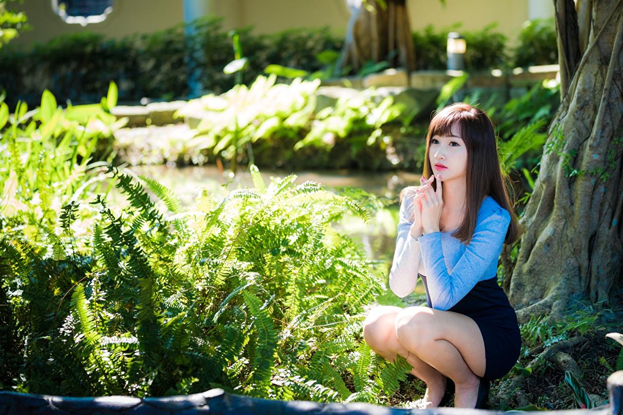 Фото Шатенка боке молодые женщины ног Азиаты рука Сидит кустов шатенки Размытый фон девушка Девушки молодая женщина Ноги азиатка азиатки Руки сидя сидящие Кусты