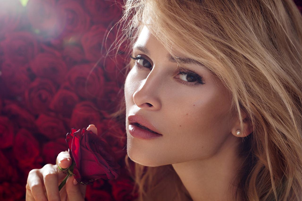 Картинки Блондинка Розы Лицо молодая женщина смотрят блондинок блондинки роза лица Девушки девушка молодые женщины Взгляд смотрит