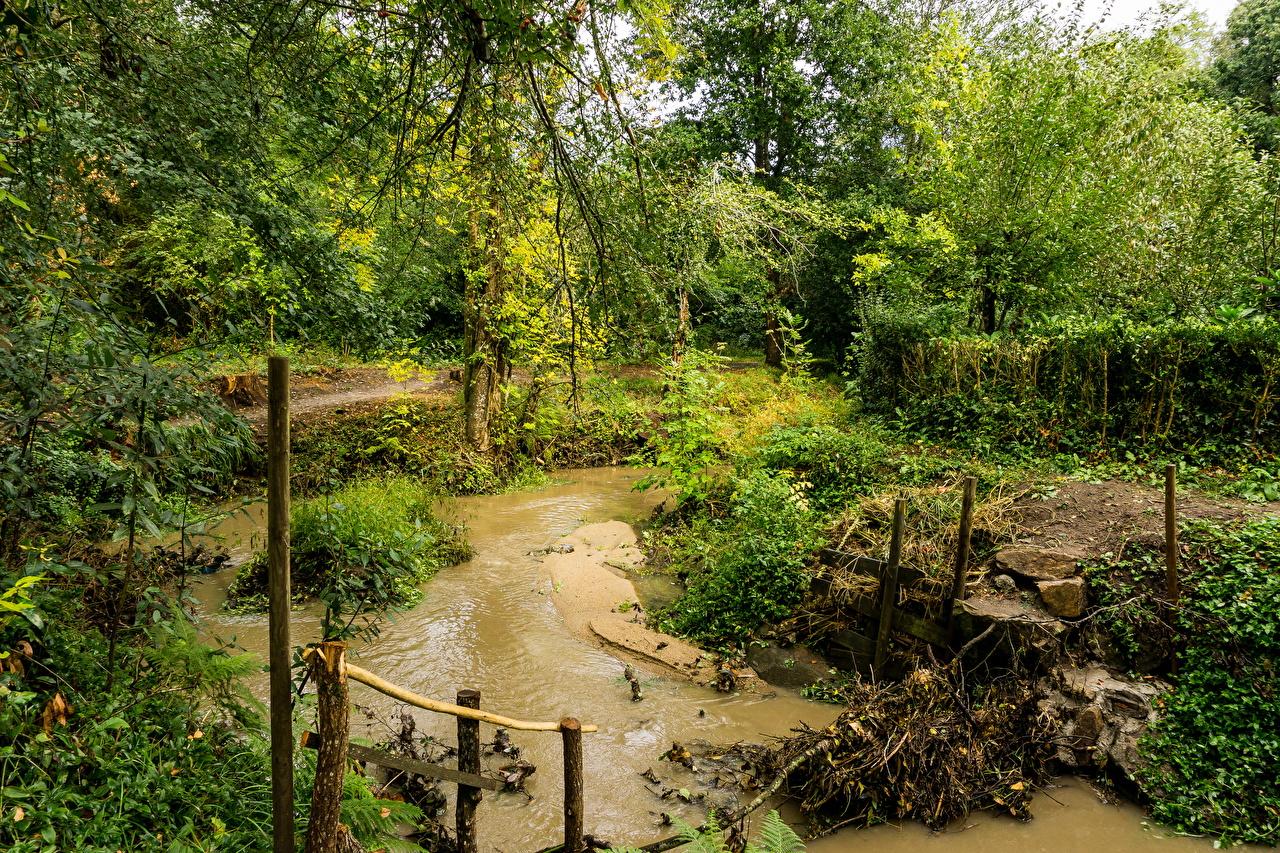 Картинки Испания Pontevedra Galicia Природа Пруд парк кустов Парки Кусты