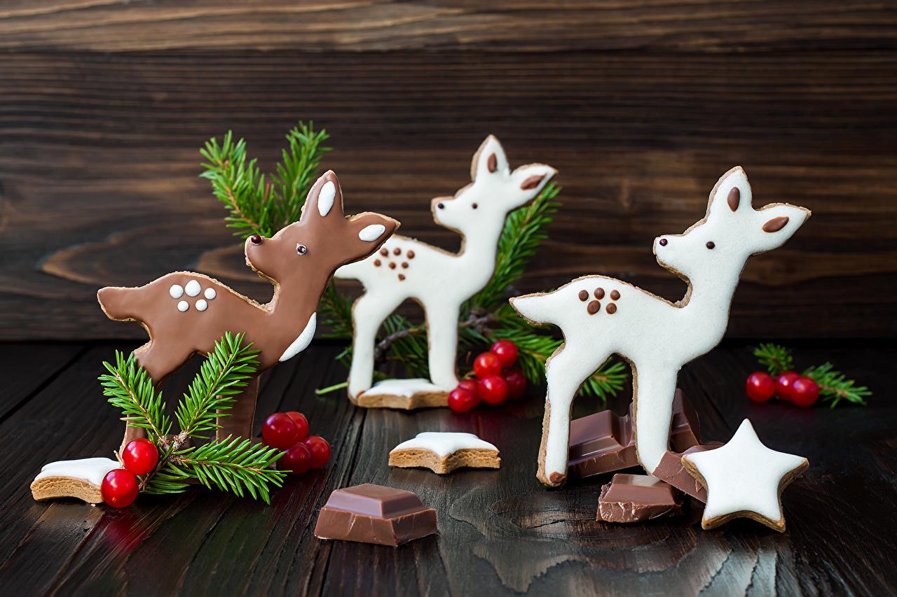 Фотография Олени Новый год Звездочки Шоколад Еда ветвь Рождество Пища Ветки ветка на ветке Продукты питания
