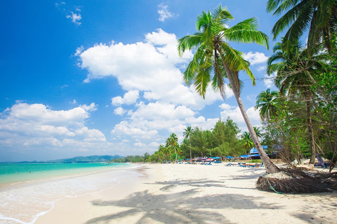 Фотографии Пляж Природа Пальмы Тропики Деревья