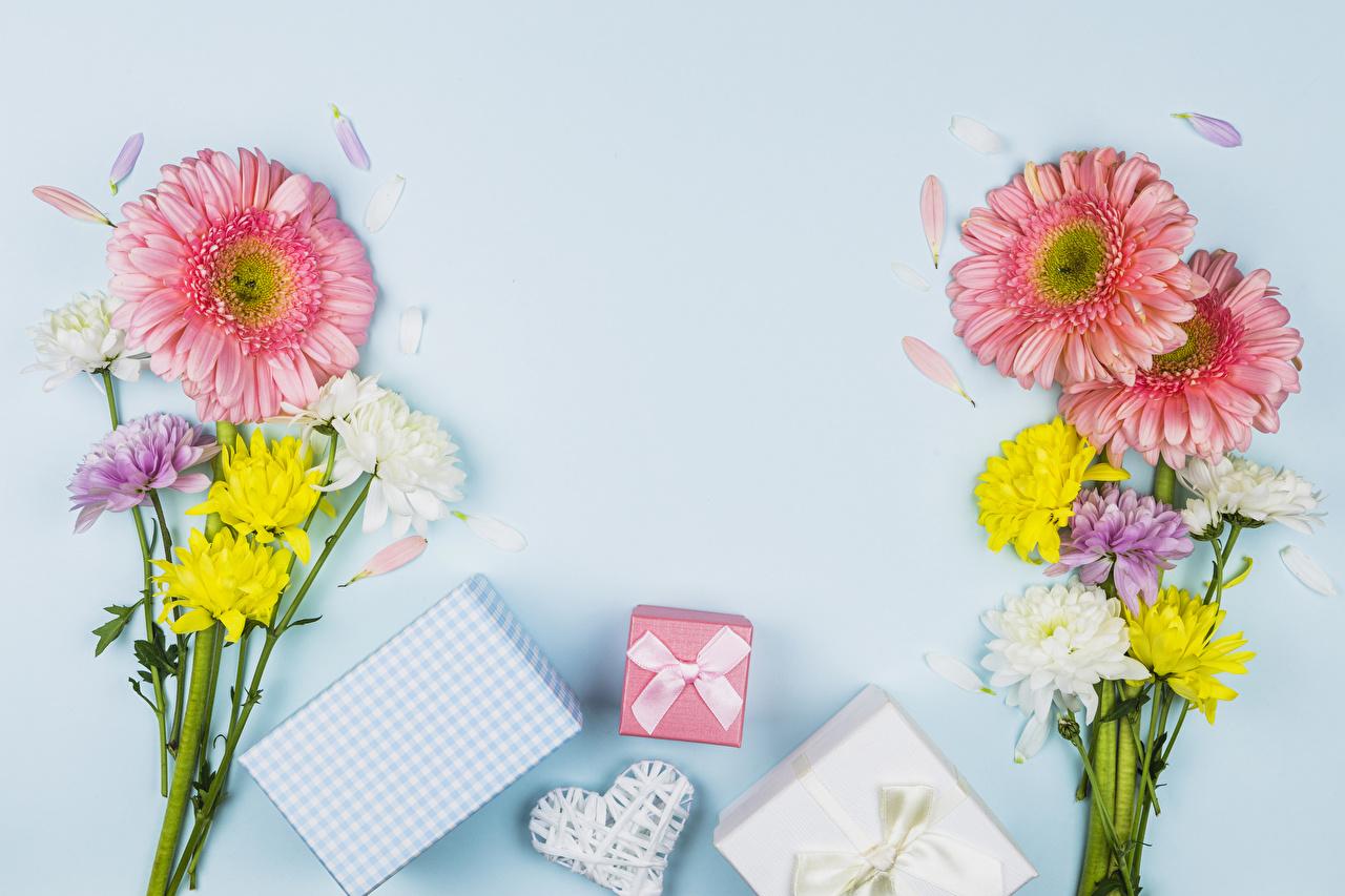 Фотография День святого Валентина сердца Блокнот букет Герберы цветок подарков Хризантемы Бантик Шаблон поздравительной открытки Цветной фон День всех влюблённых серце Сердце сердечко Букеты гербера Цветы подарок Подарки бант бантики