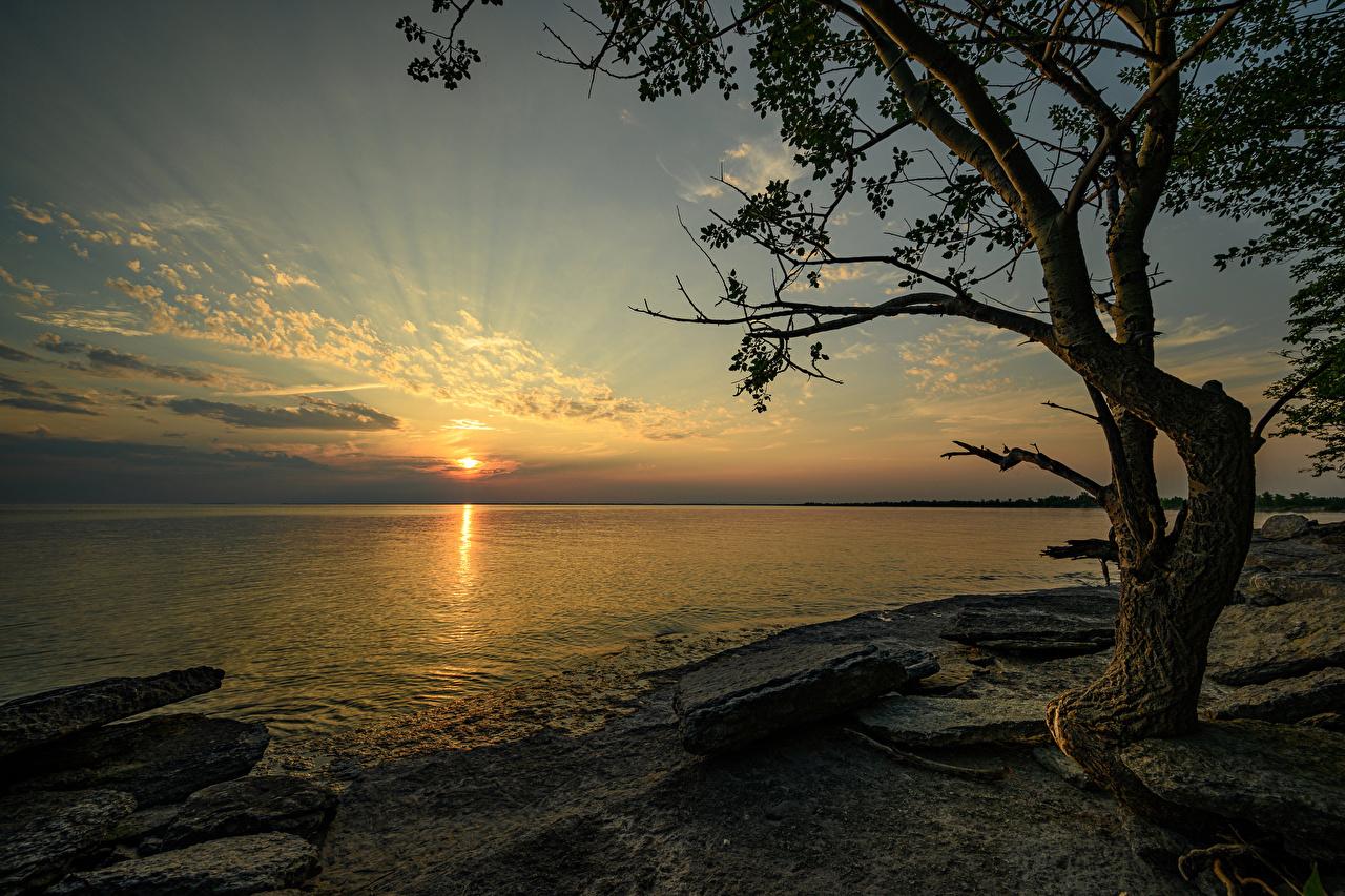 Картинки Канада Ontario Природа Рассветы и закаты Залив Камень Побережье Деревья рассвет и закат берег Камни заливы залива дерево дерева деревьев