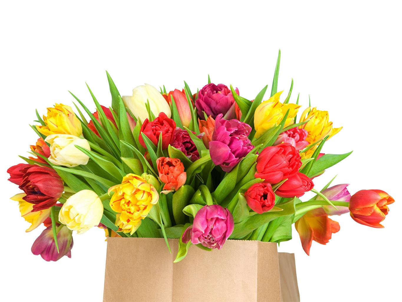 Фотографии Бумажный пакет Разноцветные Букеты тюльпан цветок белым фоном букет Тюльпаны Цветы Белый фон белом фоне