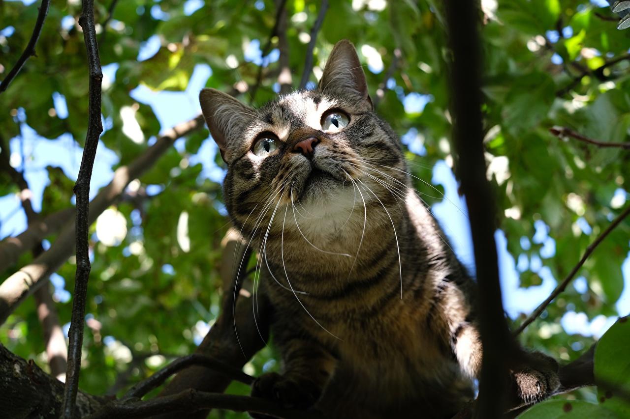 Картинки коты Усы Вибриссы Морда на ветке смотрят животное кот Кошки кошка ветвь ветка Ветки морды Взгляд смотрит Животные