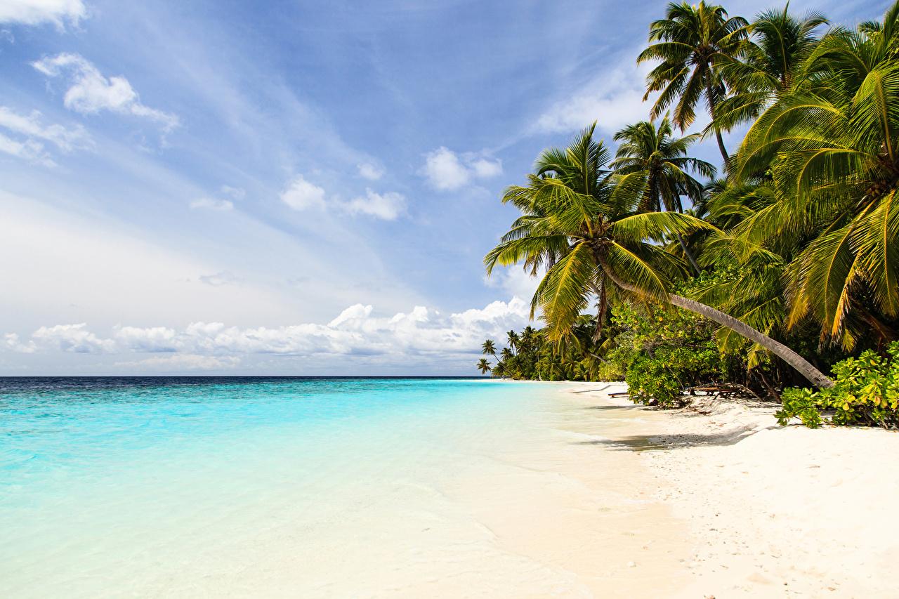 Фото Природа Небо Пальмы Тропики Побережье берег