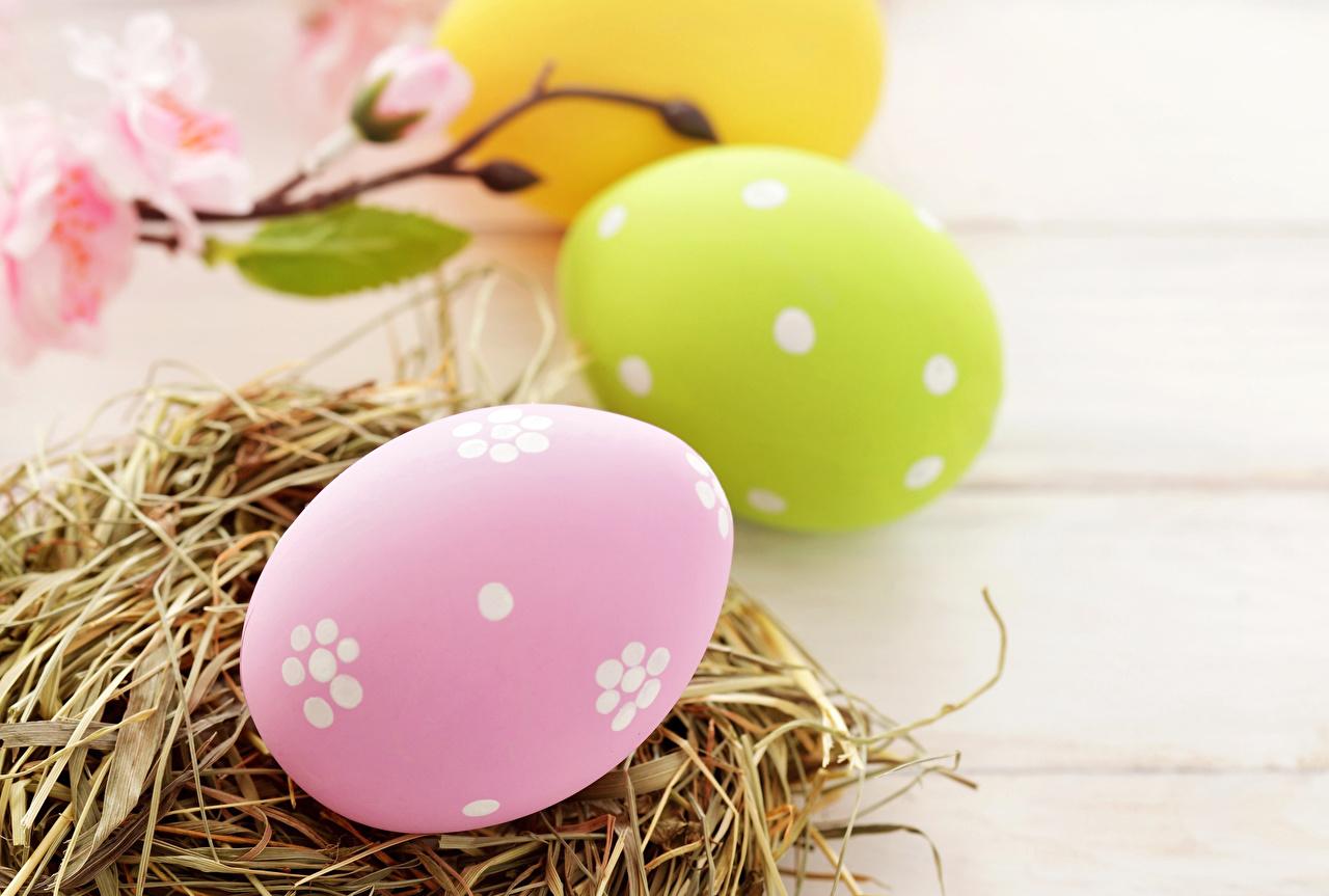 4 яйца фото