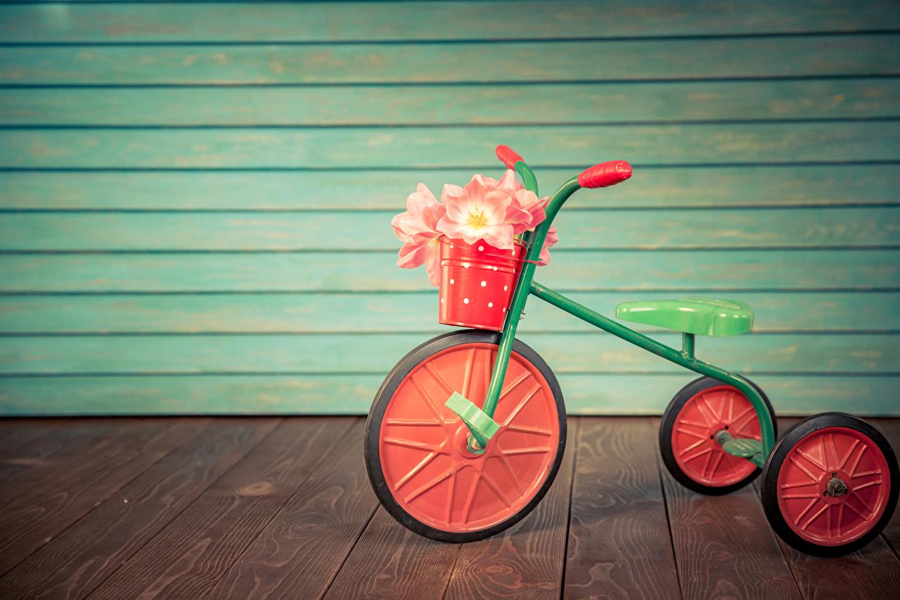 Картинка велосипеды Ведро Тюльпаны Цветы стены Доски Велосипед велосипеде ведре ведра тюльпан цветок стене Стена стенка