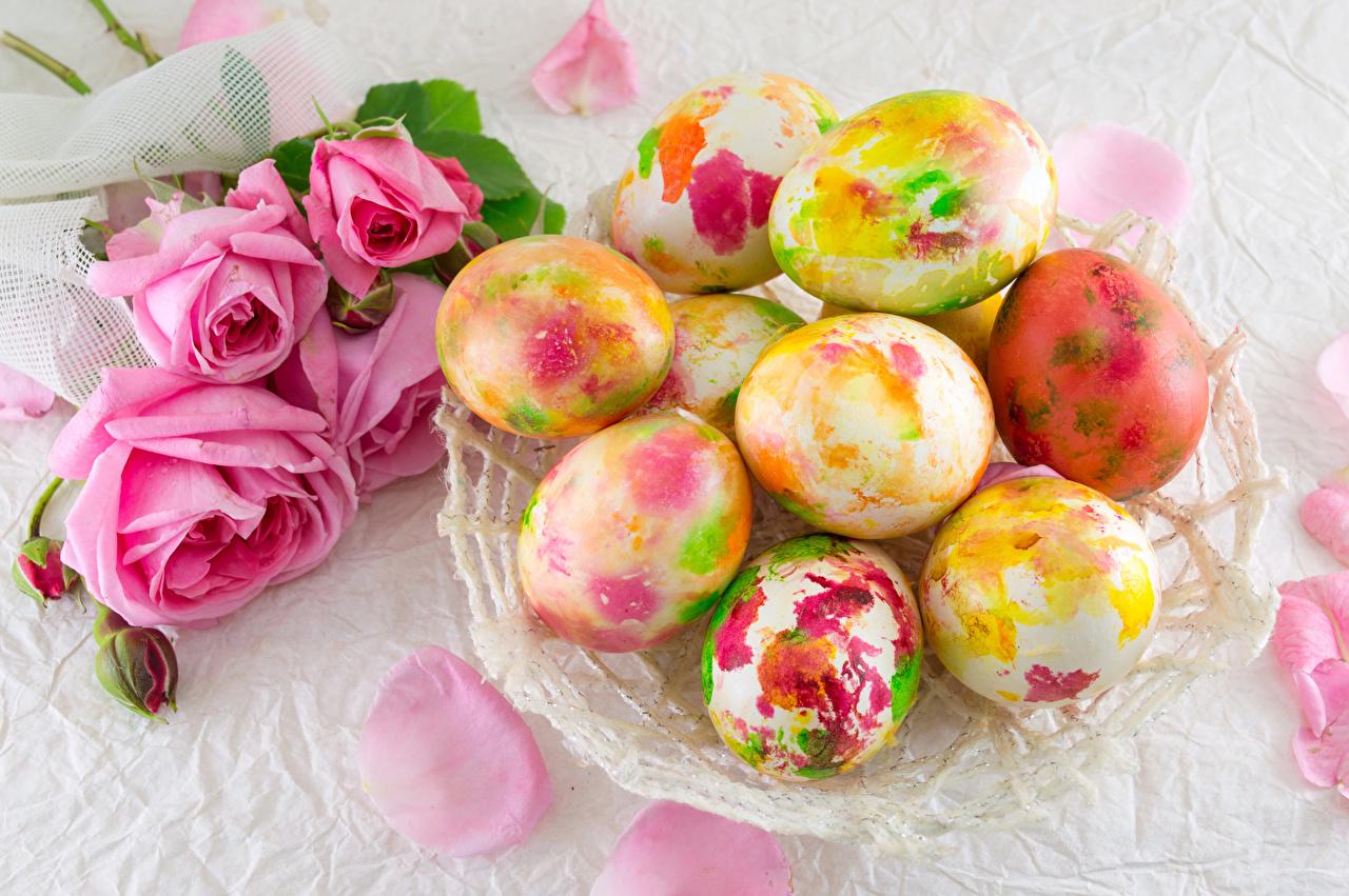 Обои для рабочего стола Пасха Разноцветные яйцо роза Праздники яиц Яйца яйцами Розы