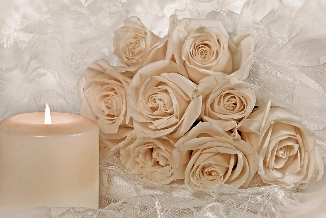 Картинки Розы Цветы Свечи роза цветок