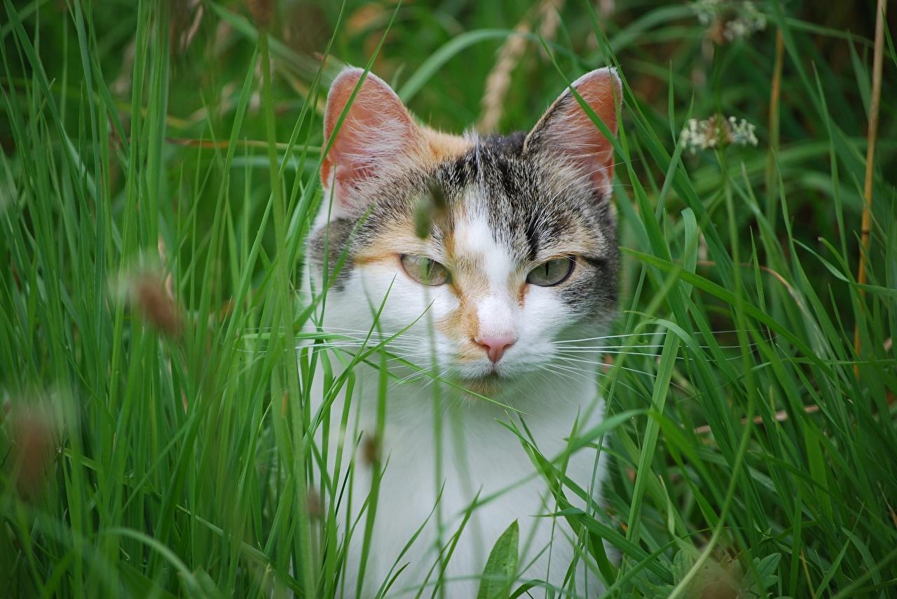 Фотография кошка Трава Взгляд Животные кот коты Кошки траве смотрит смотрят животное
