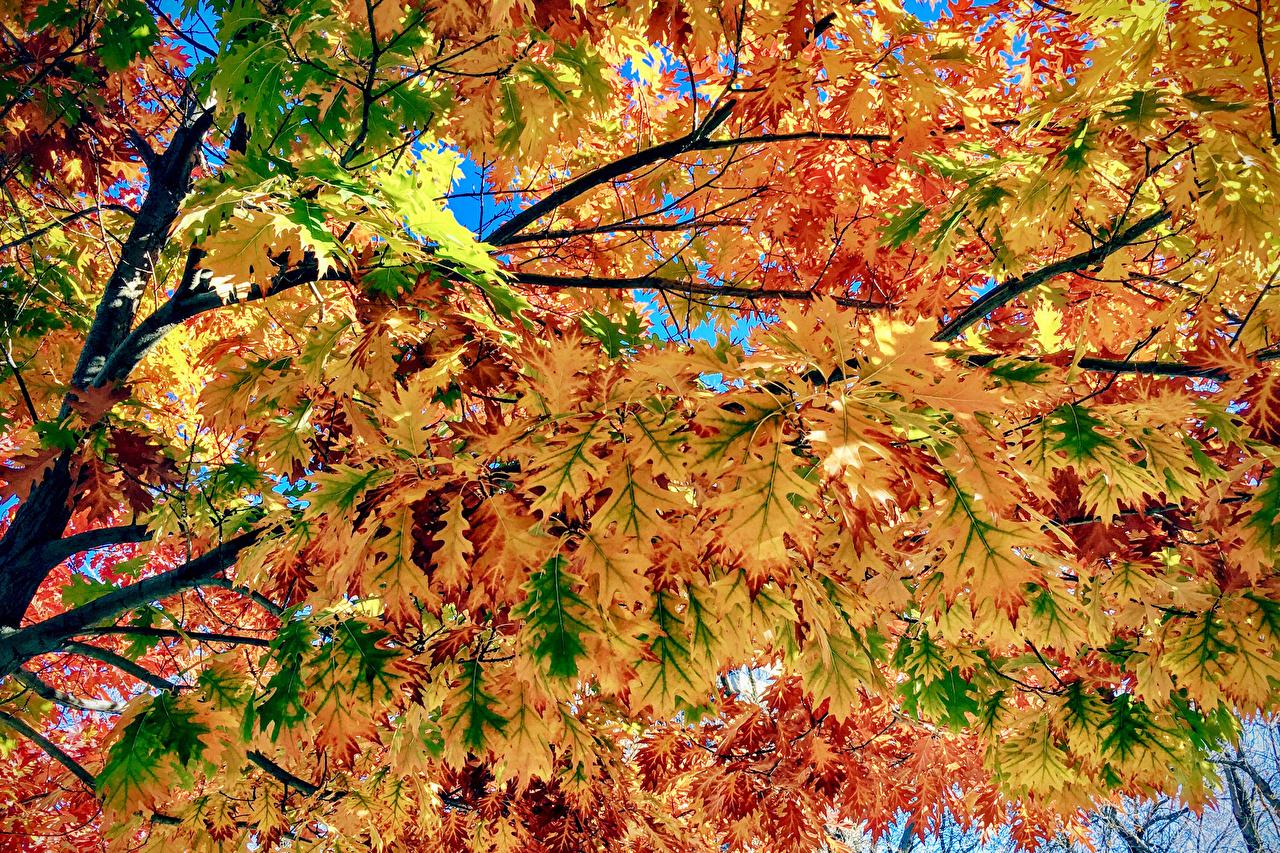 Картинка лист Природа осенние на ветке вблизи Листья Листва Осень Ветки ветка ветвь Крупным планом