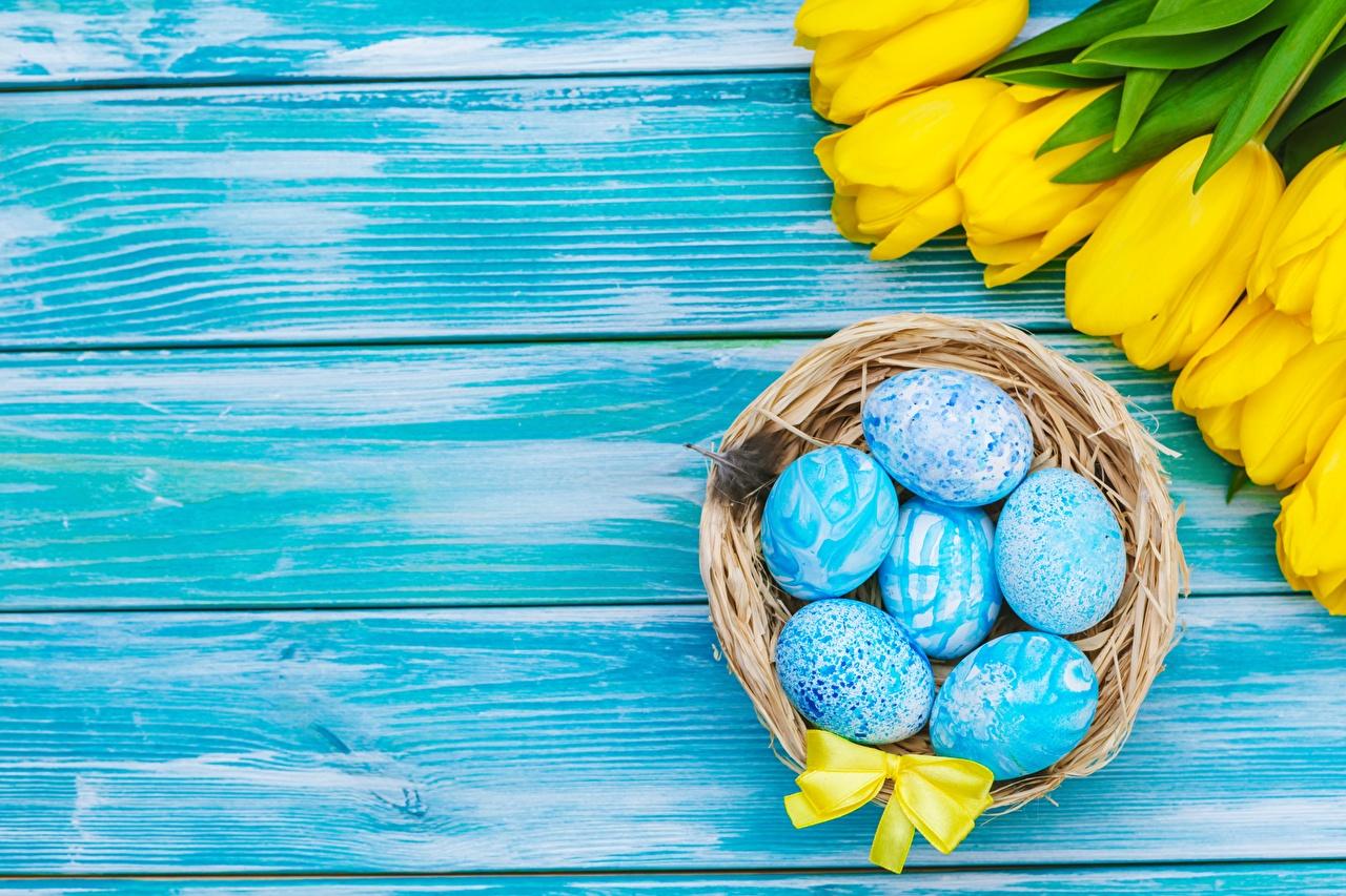 Фото Пасха Яйца Тюльпаны Шаблон поздравительной открытки Доски яиц яйцо яйцами тюльпан