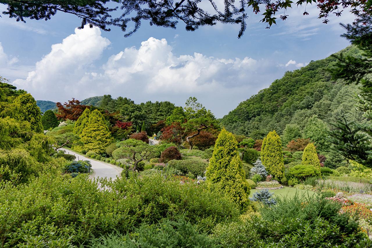 Обои для рабочего стола Сеул Южная Корея Природа парк кустов деревьев Парки Кусты дерево дерева Деревья