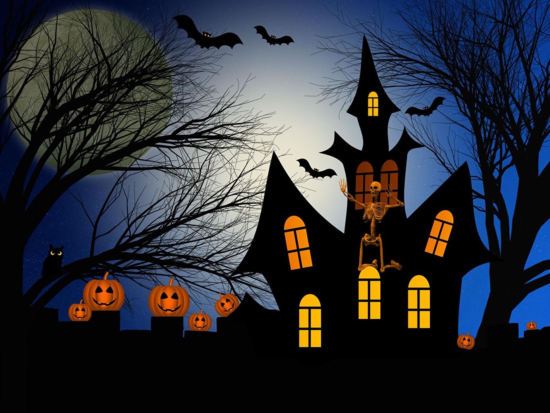 Фото Тыква силуэта Замки Хеллоуин ветвь Силуэт силуэты замок хэллоуин Ветки ветка на ветке
